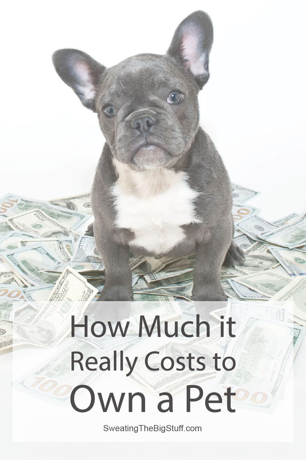 How Much it Really Costs to Own a Pet